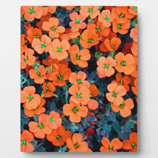 Little Orange Flowers Plaque
