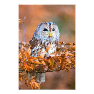 Little Owl Photo Print