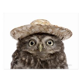 Little Owl wearing a straw hat - Athene noctua Postcard