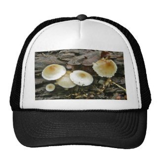 Little Parasols Mushrooms on Log Trucker Hat