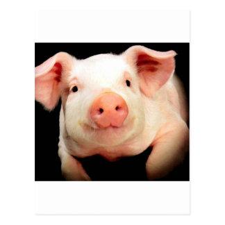 Little Piggy Postcard