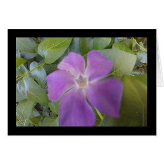 Little Purple Bloom- Song of Sol. 8:6 Greet. Card