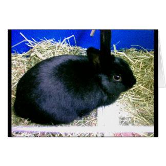 Little Rabbit 2 Card