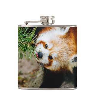 Little Red Panda With Fern - Animal Photography Hip Flask