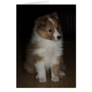 """Little Sarge""  Shetland Sheepdog Puppy Card"