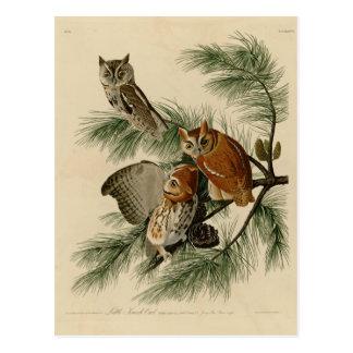Little Screech Owl Postcard
