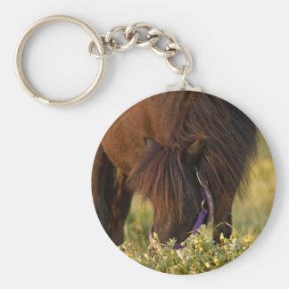 Little Sharni Shetland Pony Keychain