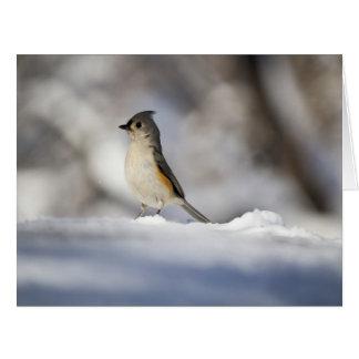 Little Snow Bird Card
