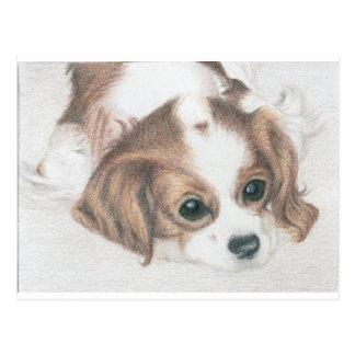 little spaniel dog postcard