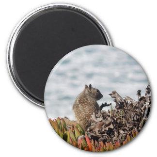 Little squirrel 2 inch round magnet