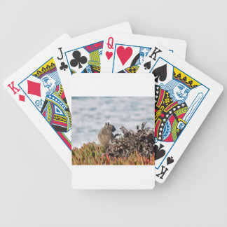 Little squirrel bicycle playing cards