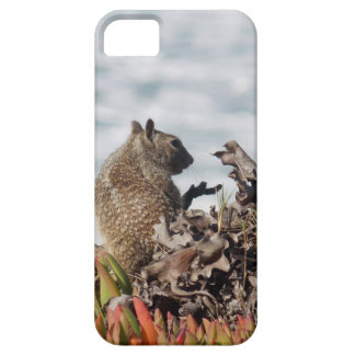 Little squirrel iPhone 5 covers