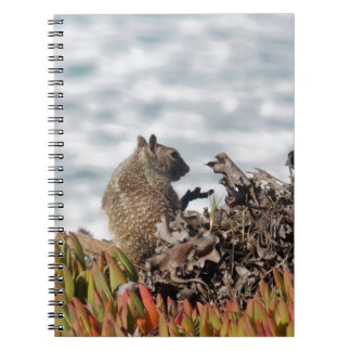 Little squirrel notebook