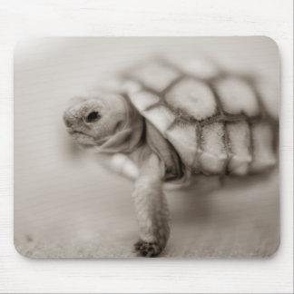 Little Tortoise Mouse Pad