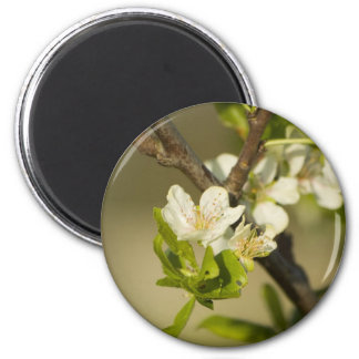 Little white flowers on a branch with green leafs 2 inch round magnet