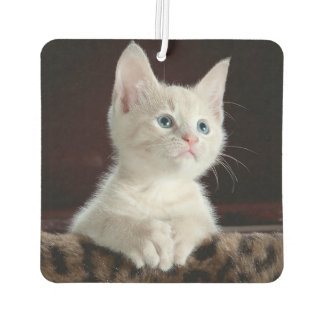Little White Kitten Custom Photo Air Freshener