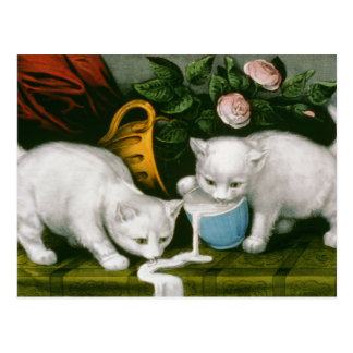 Little White Kitties - Into Mischief Postcard