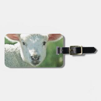 Little White Lamb Luggage Tag