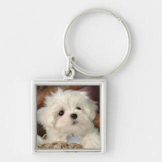 Little white puppy key chain