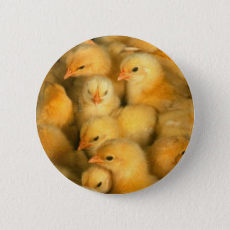 Little Yellow Chicks 2 Inch Round Button