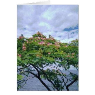 LittleBayParkmimosatree 001 Card