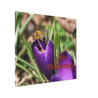 Live Deliberately w/honey bee pollinating Crocus Canvas Print