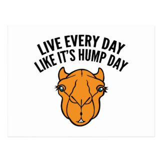 Live Every Day Like It's Hump Day Postcard