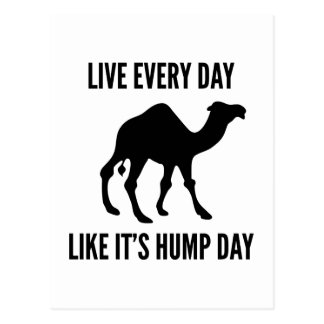 Live Every Day Like It's Hump Day Post Cards