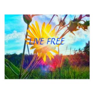 LIVE FREE2 WILDFLOWER POSTCARD