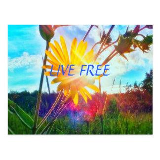 LIVE FREE WILDFLOWER POSTCARD