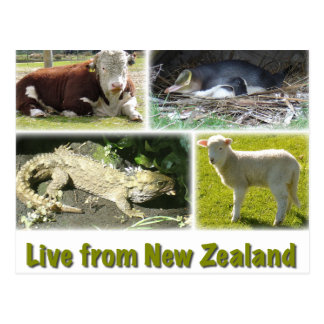 Live from New Zealand Postcard