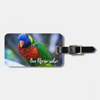 """""""Live in Color"""" Quote Red Blue & Green Bird Photo Luggage Tag"""