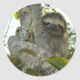 Live Life Like a Sloth Classic Round Sticker