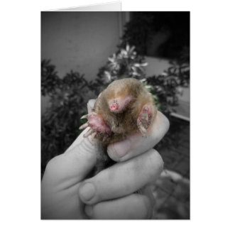 Live mole in hand smiling colorized bw.jpg card