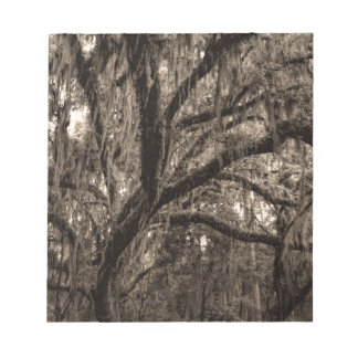 Live Oak and Spanish Moss in Sepia Tones Notepads