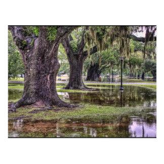 Live Oak Flooding Postcard