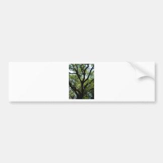 Live Oak In Downtown Savannah Bumper Sticker