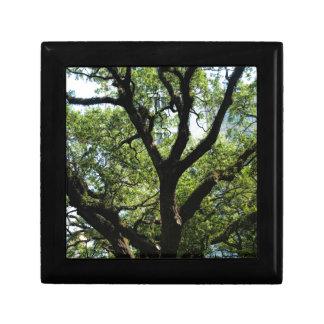 Live Oak In Downtown Savannah Jewelry Box