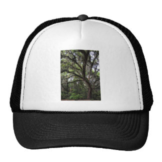 Live oak & mossLive Oak Trees - Quercus virginiana Trucker Hat