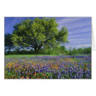 Live Oak & Texas Paintbrush, and Texas Card