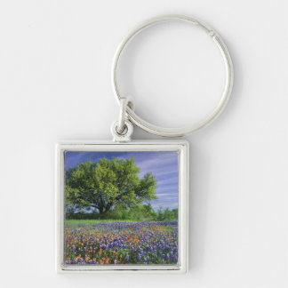 Live Oak & Texas Paintbrush, and Texas Silver-Colored Square Keychain