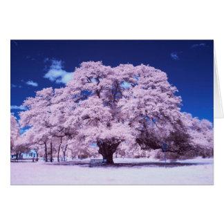 Live Oak Tree Card