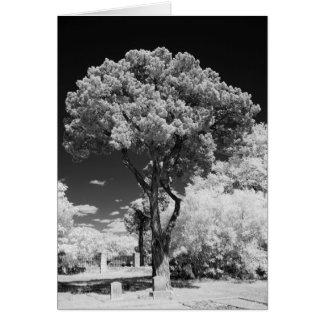 Live Oak Tree greeting card 5x7, blank inside.