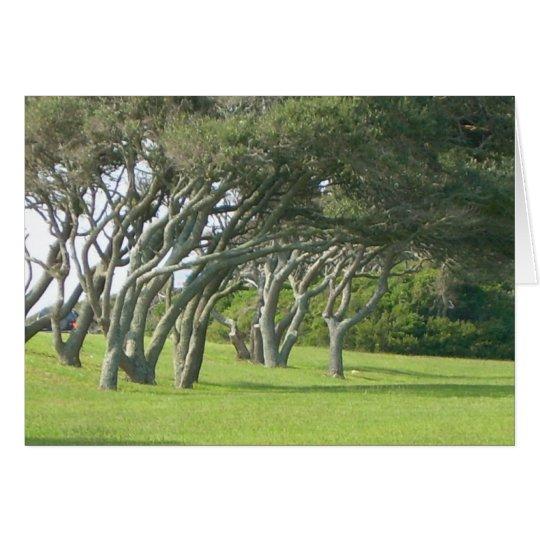 Live Oak Trees Card