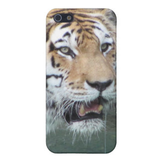 Live tiger covers for iPhone 5