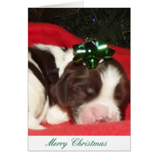 Liver and white sleeping English Springer Spaniel Card