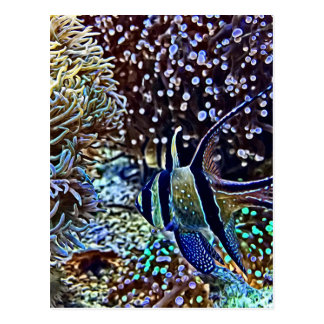 Living Reef and Fish Postcard