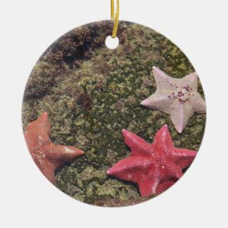 Living starfish (4).JPG Ceramic Ornament