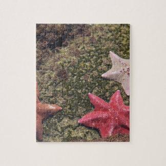Living starfish (4).JPG Jigsaw Puzzle
