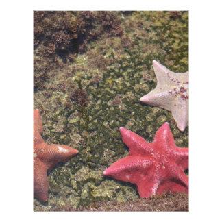 Living starfish (4).JPG Letterhead